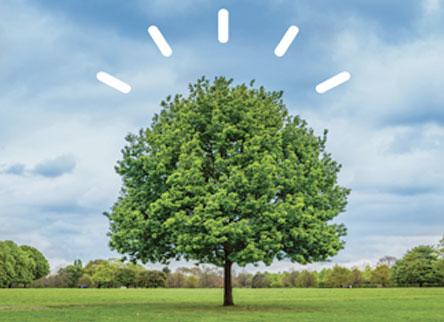 Árbol Inteligente