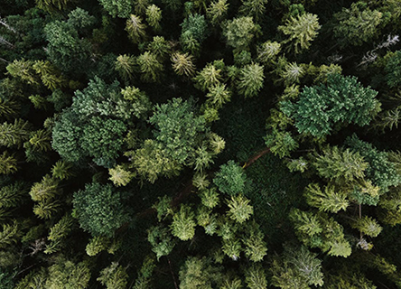 Aerial view of a healthy forrest